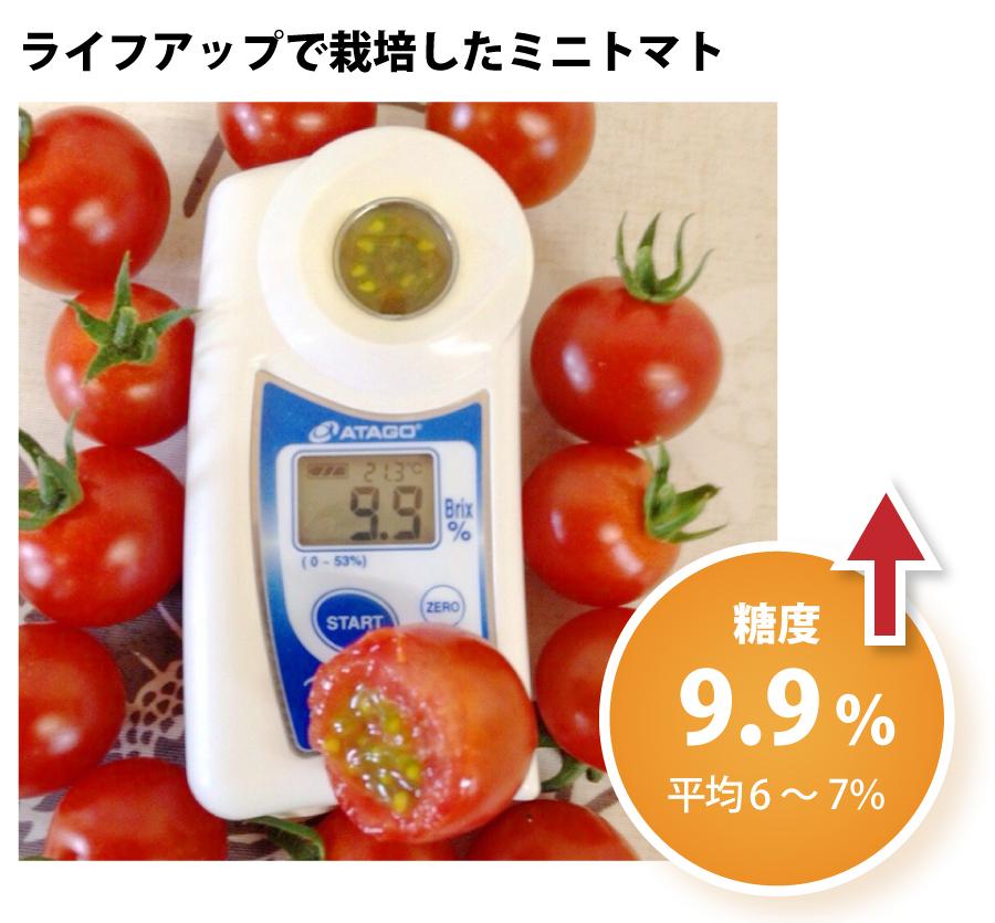 ライフアップで栽培したミニトマト