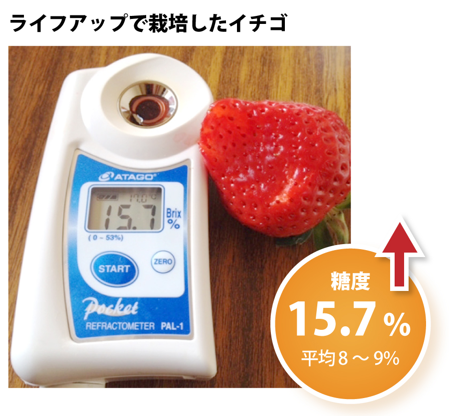 ライフアップで栽培した苺