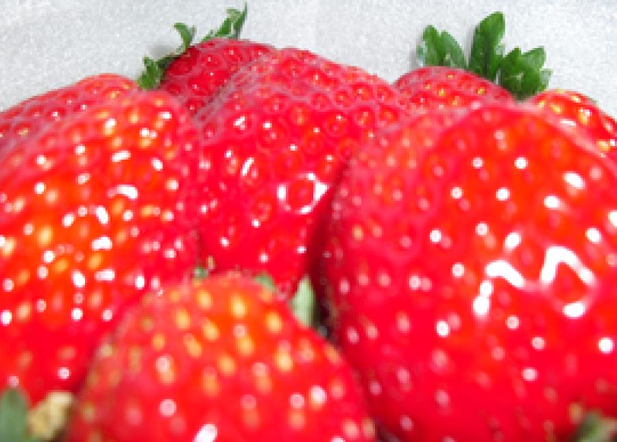 熊本の苺農家さん